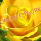 Flores Romance de FLORERIAS en CIUDAD NUEVA