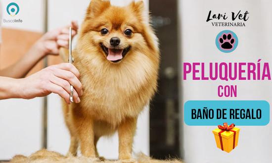 Peluquería + baño de regalo para tu mascota